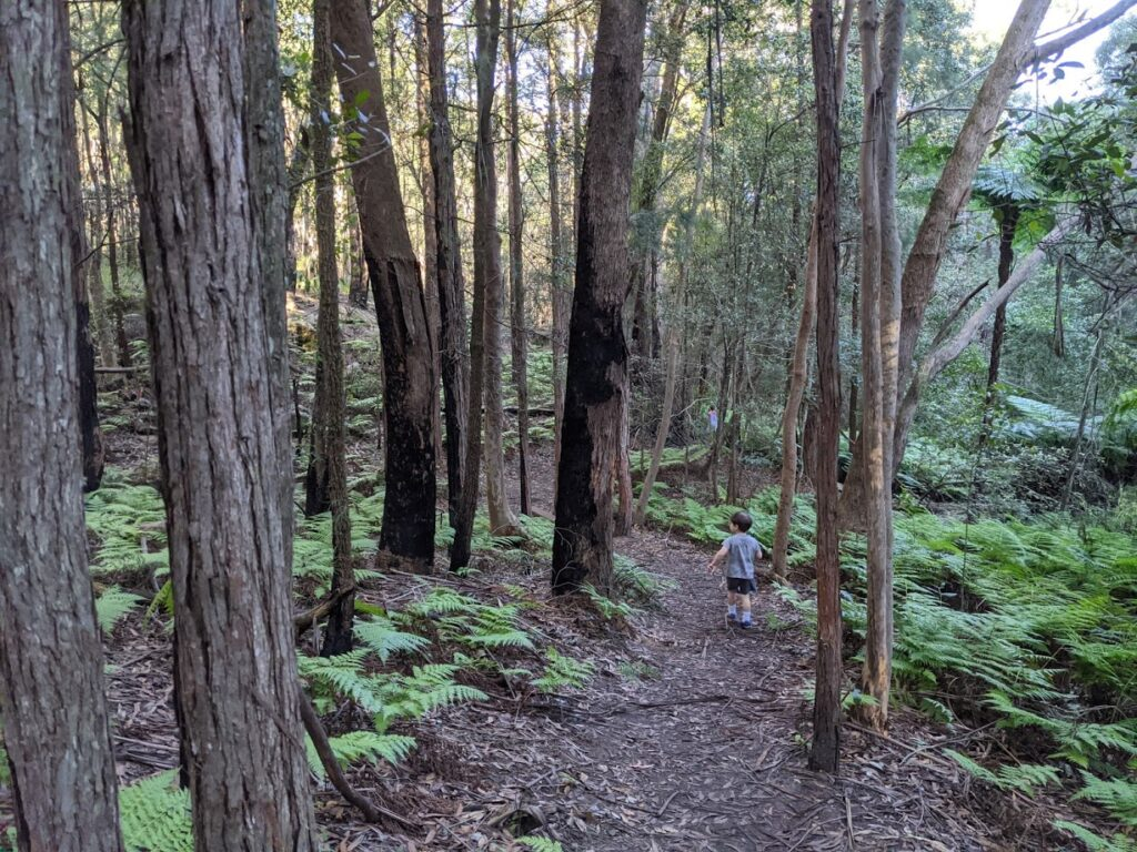 Fairy Dell, Springwood, bushwalks for kids in the Blue Mountains