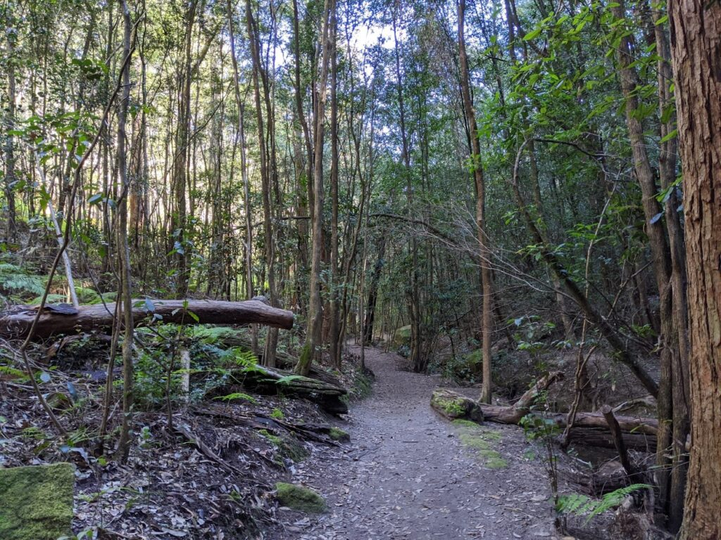 Birdwood Gully walk, Springwood, bushwalks for kids in the Blue Mountains