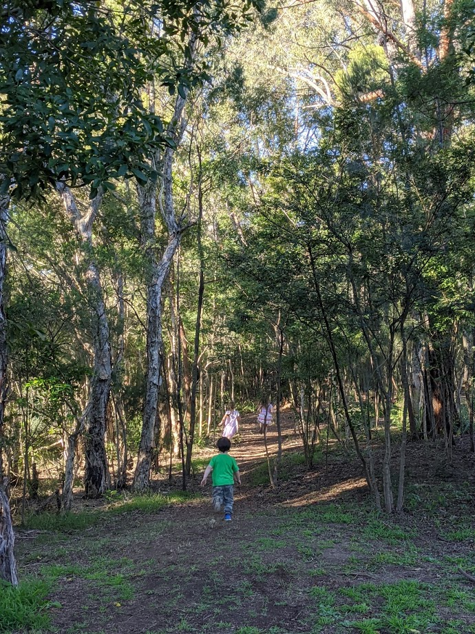 Glenbrook Lagoon walk, bushwalks for kids in the Blue Mountains