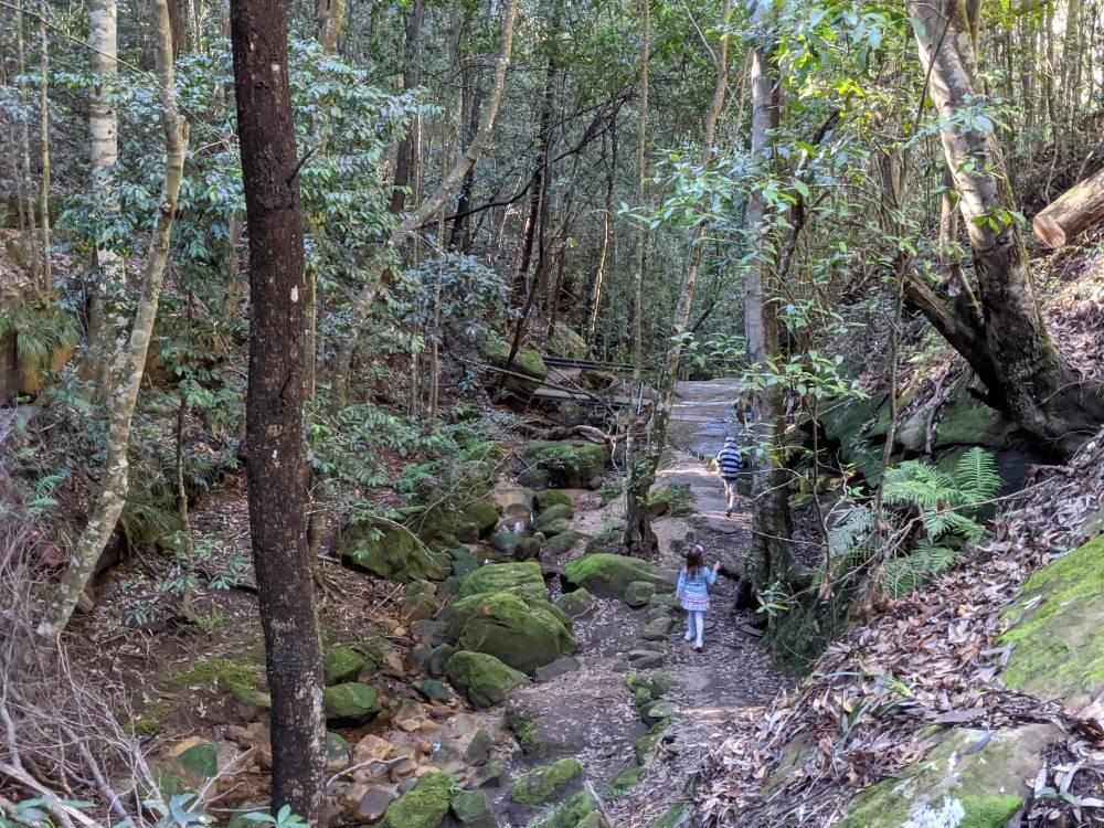birdwood gully path top view