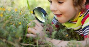 bush preschool blaxland