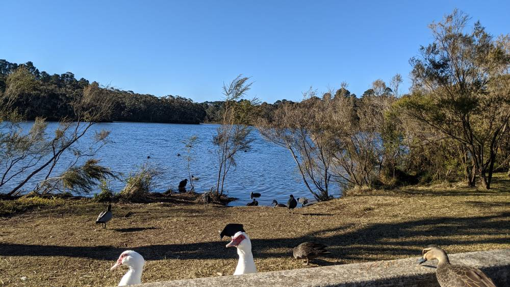 wentworth falls lake birds