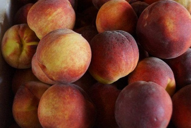 pick your own fruit peaches