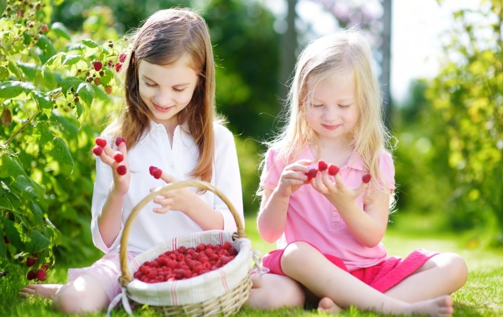pick your own fruit two girls with raspberries on their fingers