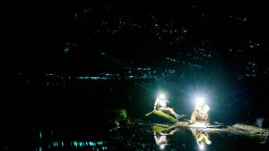 hooked on nature glow worm tours