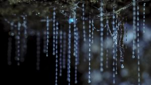 hooked on nature blue mountains glow worms