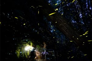 firefly glow worms hooked on nature blue mountains