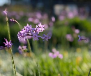 livvi's place jordan springs beautiful flowers