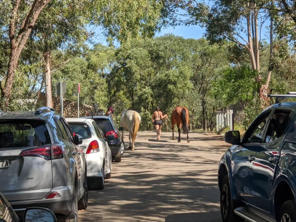yarramundi reserve blue mountains horses