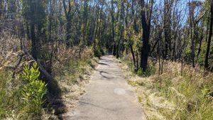 fairfax heritage track blackheath blue mountains national park easy walk