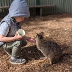 Spend Australia Day with Australian Animals at Featherdale Sydney Wildlife Park For $10: Wake up with the Wildlife
