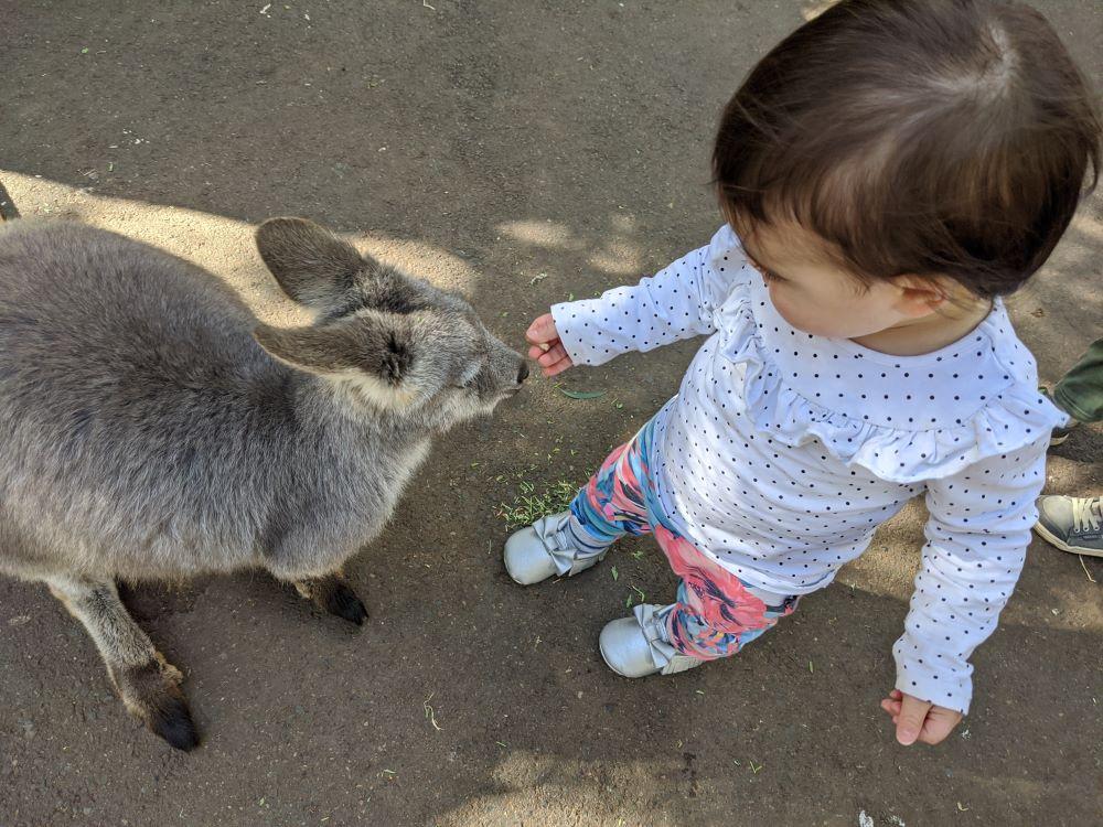 featherdale sydney little girl feeding a wallaby