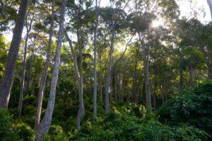 bushcare blue mountains bushland