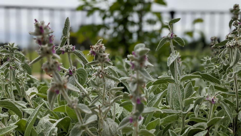 governor phillip park windsor sensory element plants