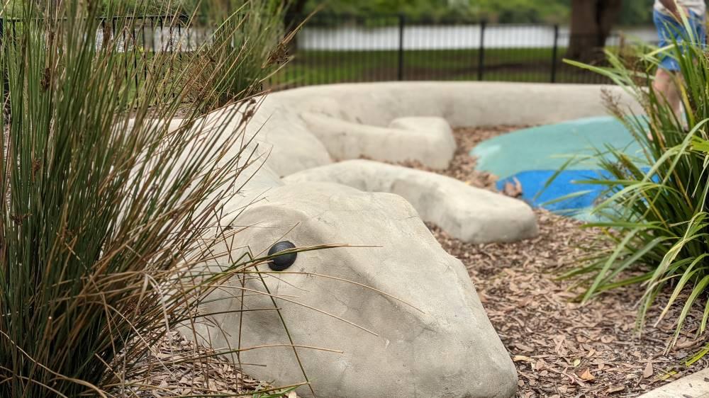 large lizard at Governor Phillip Park Windsor