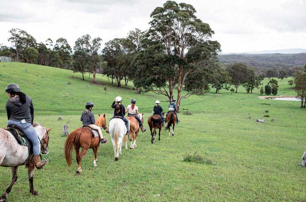 centennial glen stables kanimbla valley near blackheath blue mountains horse and pony rides