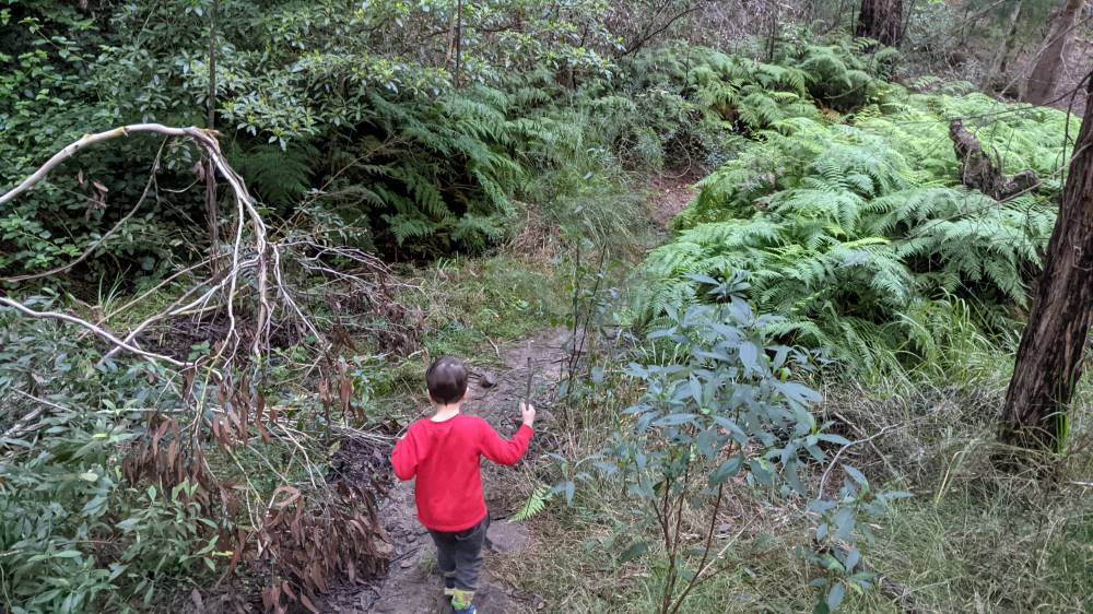 Duck Hole Track Glenbrook great for kids