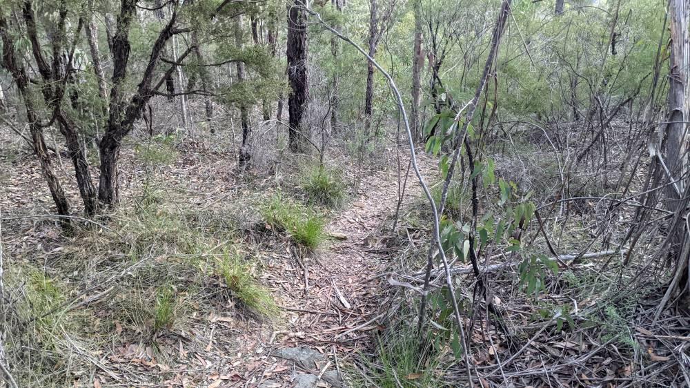 Duck Hole Track Glenbrook leaf litter