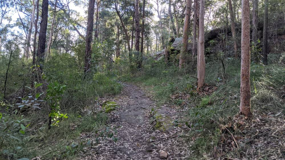 Duck Hole Track Glenbrook the track