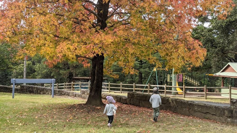 jackson park faulconbridge from corridor of oaks