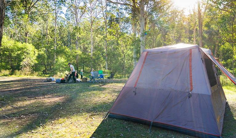 Things To Do In The Blue Mountains  camping at euroka clearing glenbrook